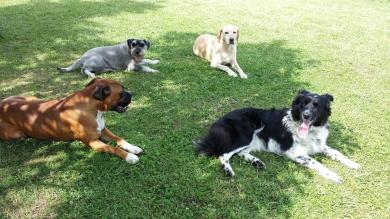 Die Tagesstätte und Pension  Die Hundetagesstätte und Pension befindet sich am Ortsrand von Klein Ziethen. Hinter Ihr kommen nur noch Felder, Wiesen und Wälder. Zahlreiche Wanderwege stehen mir hier z